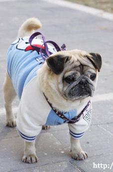 pug for blog