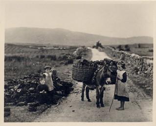 Irish turf carriers