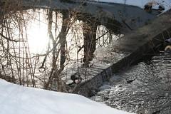 IMG_9121 (TheFarmer) Tags: creek cedar midfebruary