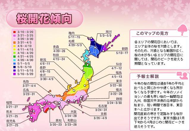 2011桜開花傾向