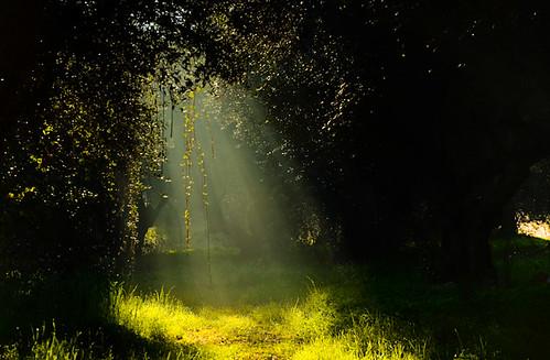 la luz de los árboles