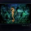 Seahorse dreams (shastadaisy~) Tags: canon square seahorse textures tasmania awardtree selectbestexcellence sbfmasterpiece seahorsedreams