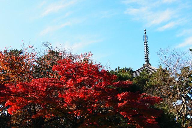 20101116_101520_興福寺