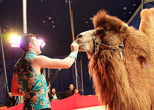 Circus19