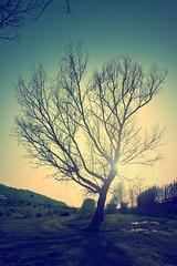 Ocaso 5 (JAG_50D) Tags: autumn light sky españa naturaleza verde green sol nature azul clouds forest twilight spain europa europe meadow catalonia cielo crepusculo ocaso llinarsdelvalles gettyimagesiberiaq2