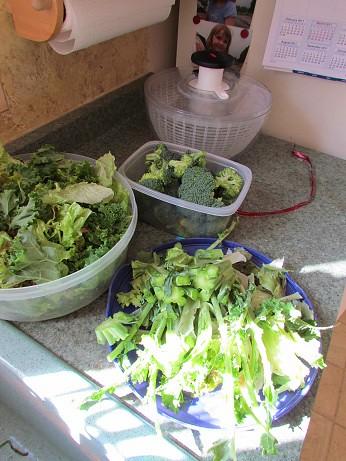 Tuesday Veggie Prep