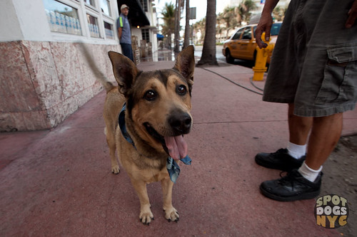 Rusty - Famous dog in South Beach Miami