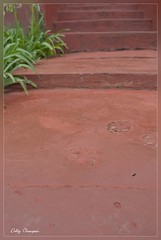 Paw Prints (Debby Champion) Tags: africa old southafrica tin gold town nikon mining shops sa quaint oldfashioned pilgrimsrest easterntransvaal