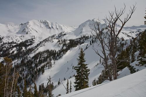 Upper White Pine