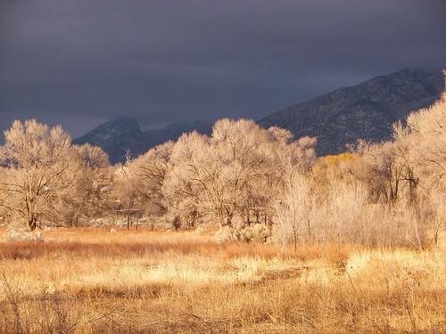 Taos Skies