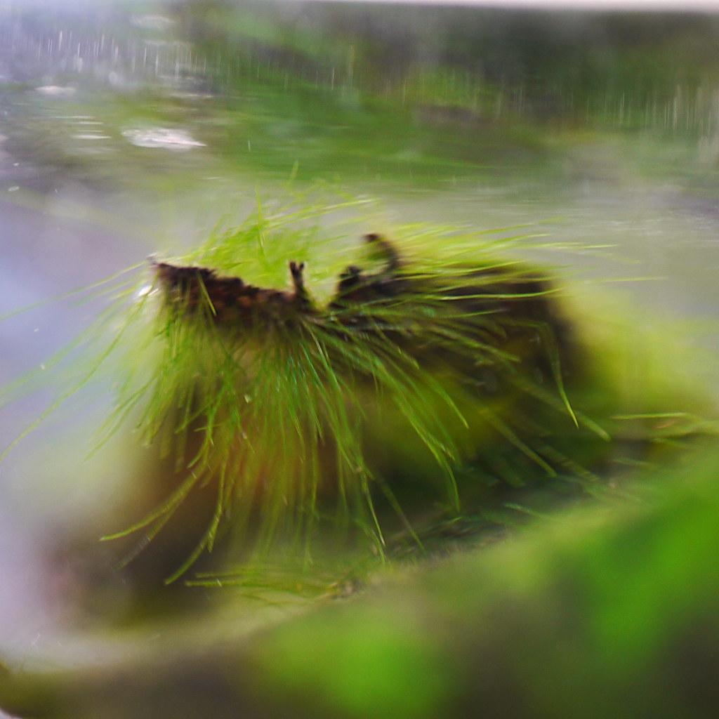 the world 39 s best photos of alge and wasser flickr hive mind. Black Bedroom Furniture Sets. Home Design Ideas