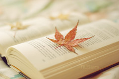 Little treasures (RL Stars) Tags: auto autumn red leaves yellow vintage hojas japanese 50mm book leaf rojo dof cross little pentax creative harry potter libro amarillo processing otoo photoart vigo treasures chinon pequeos tesoros f17 cruzado proceso creativas k200d rlstars