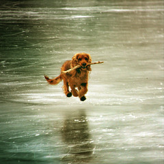 ~ Teo on ice ~ (~ Pixel Passion ~) Tags:
