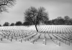 brave souls (OneEyedJax) Tags: winter tree cemetery wisconsin thankyou rip milwaukee soldiers february tombstones gravestones lonetree woodnationalcemetery bravessouls