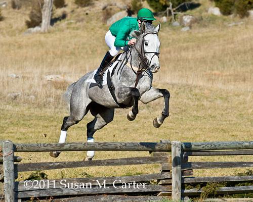 Thynnus steeplechase horse racing