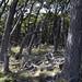Boschi nel Parque Nacional Los Glaciares