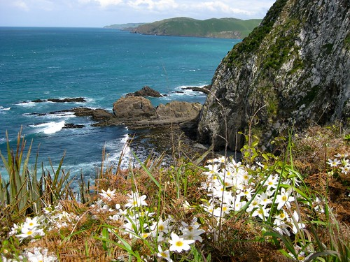 Southern Coast, South Island, the Catlins, New Zealand