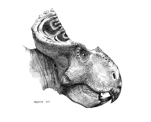 protoceratops andrewsi
