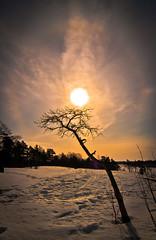 Winter Vignette 2 (navynielz) Tags: winter finland toned vignette tokina1224mmf4 tokinaatx124 atx124afprodx tokinaaf1224mmf4 tokinaatxafprodx1224mmf4