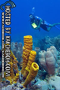 barrier_reef_scuba2