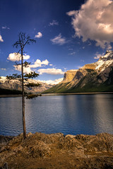 Still alive, under Rockies sky (JoLoLog) Tags: lake canada mountains tree clouds joe alberta banffnationalpark lakeminnewanka canadianrockies therockymountains canonxsi