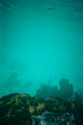 Coral Reef, John Pennekamp, Key Largo Florida