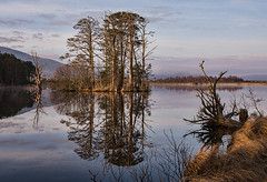 Moring Hues at Loch Mallachie (Geoff France) Tags: sun sunrise landscape dawn scotland highlands loch cairngorms cairngormsnationalpark scottishhighlands scottishlandscape lochmallache