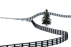 Winter Fence (ICT_photo) Tags: winter snow tree pine fence line highkey ictphoto gettyimagescanada ianthomasguelphontario