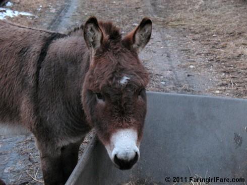 Donkey Dining 2