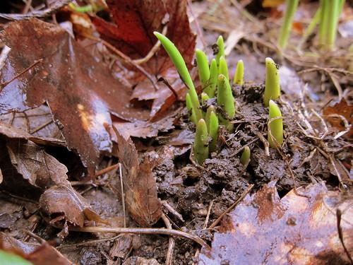Springy Evidence
