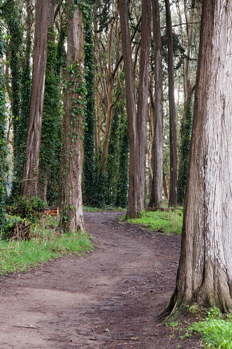 Presidio Ecology Trail