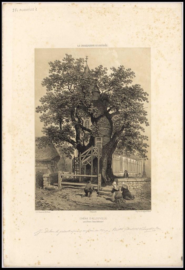Chêne d'Allouville près d'Yvetot (Seine-Inférieure). géographie --- Allouville Seine-Maritime