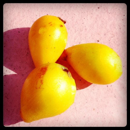 3 loquats from our tree! They're quite yummy!!