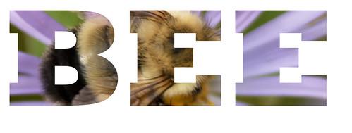 bee_text.jpg