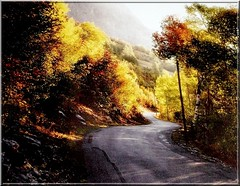 The twisting road (jackfre2 (on a trip-voyage-reis-reise)) Tags: road autumn trees sun mist fall belgium ardennes hills winding twisting bovigny