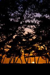 PhoTones Works #130 (TAKUMA KIMURA) Tags: sunset sea beach silhouette natural      kimura  g20 takuma  gh2  photones