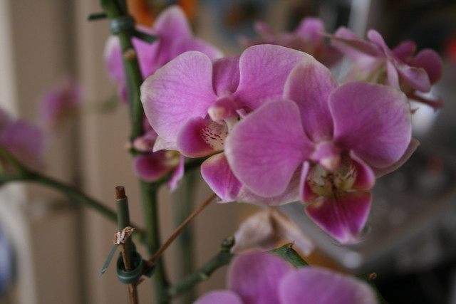tiny orchids at home