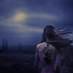 growth and worth (brookeshaden) Tags: trees sky fern clouds wind breeze missaniela brookeshaden texturebylesbrumes
