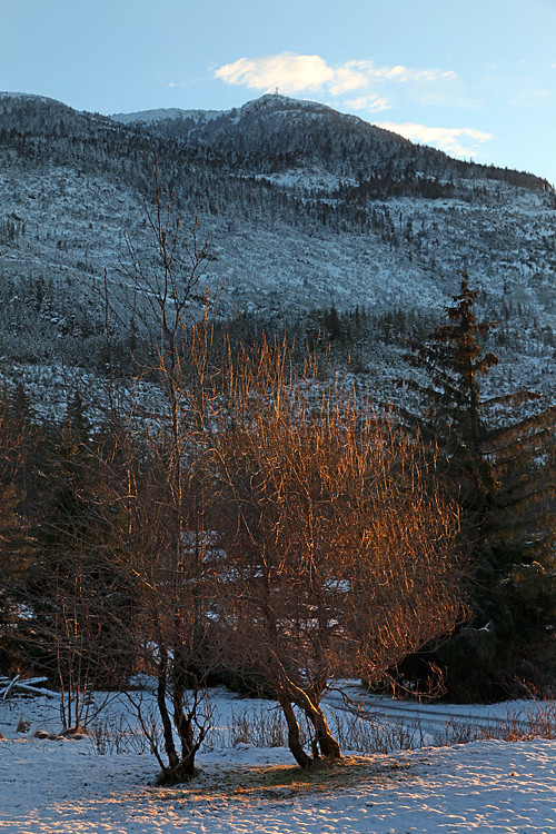 sunrise on tree, Kasaan, Alaska