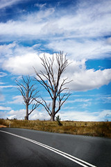 2 Trees by aussiegall, on Flickr