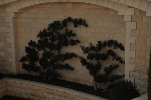 Baha'i Garden trees
