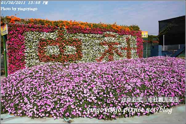 台中后里_中社光觀花市20110130_I6158