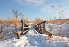 into the prairie, after the blizzard (christiaan_25) Tags: bridge blue winter sky white snow cold grass sunshine weather clouds landscape day shadows horizon perspective tan straw sunny calm clear prairie february snowfall tallgrass mortonarboretum aftertheblizzard schulenbergprairie