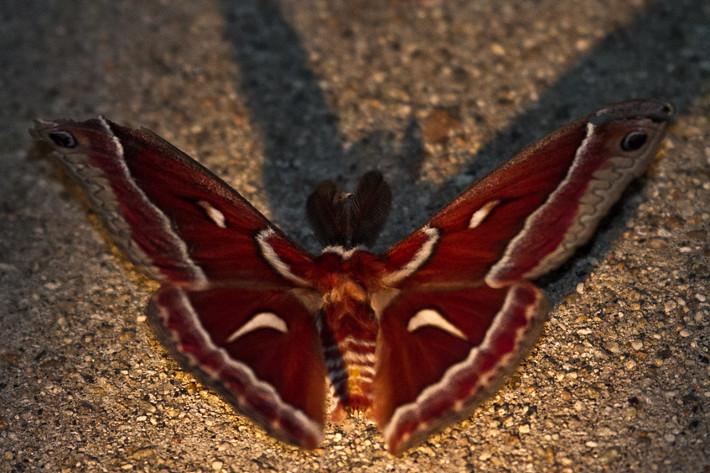 020711_moth