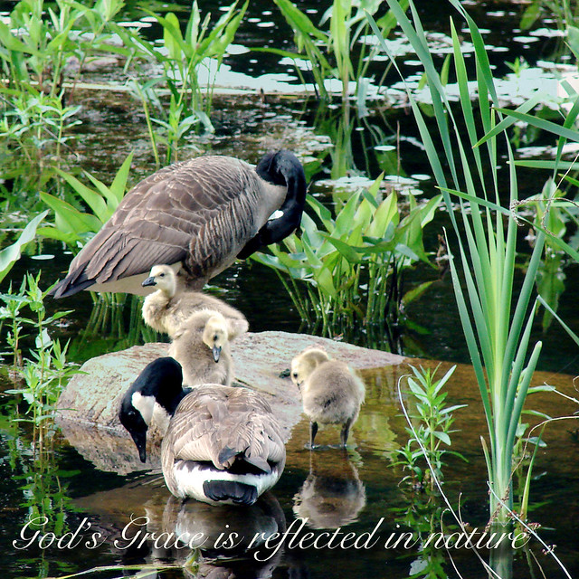 God's Grace is reflected in nature