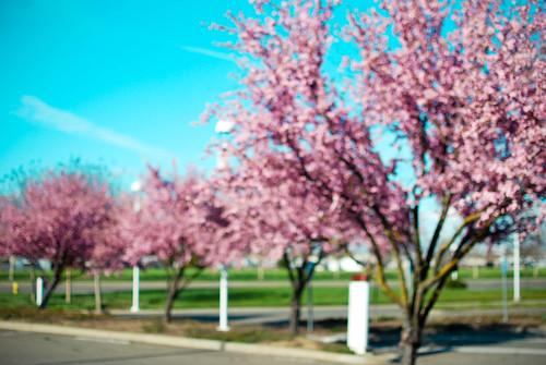 spring5-0151