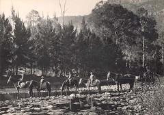 Anglų lietuvių žodynas. Žodis horseriding reiškia n jodinėjimas lietuviškai.