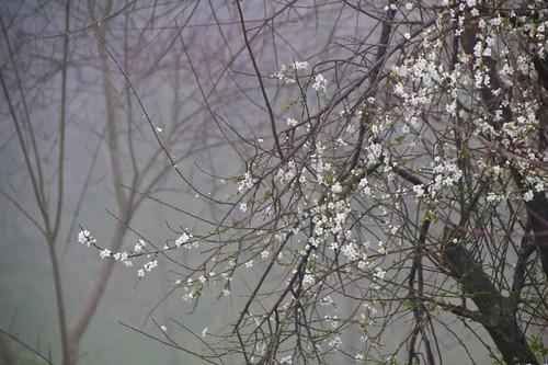 Llega la Primavera a la Arboleda...y la niebla!