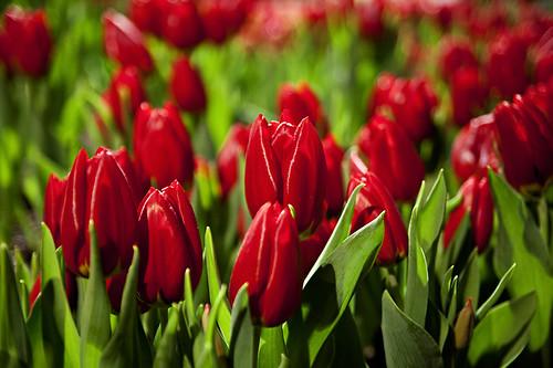 RI Spring Flower Show