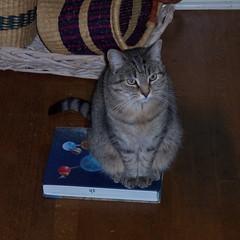 A bookish cat